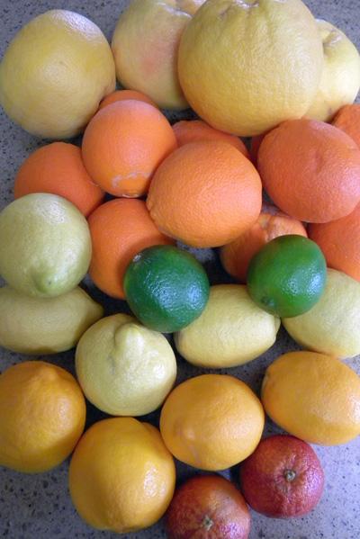 back to front: pink grapefruit, navel orange, lime, lemon, Meyer lemon, and blood orange