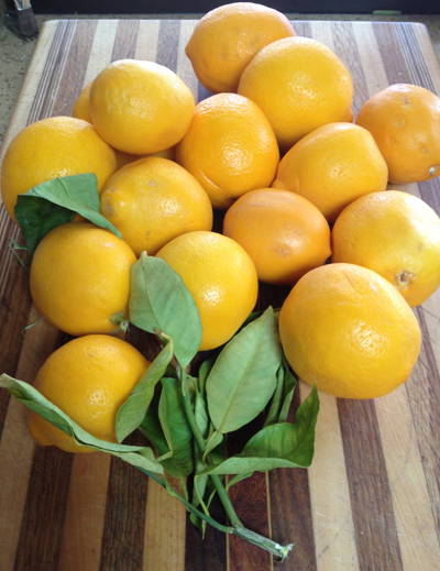 Meyer lemon bunch