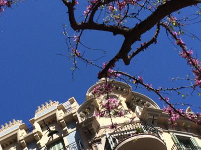 belle tree