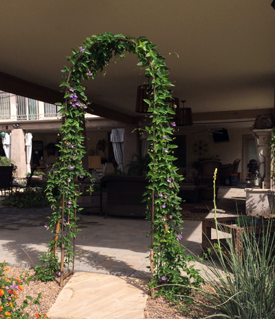 vine covered arch