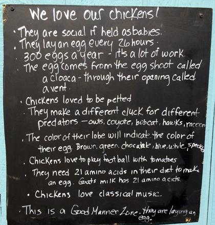 love chickens