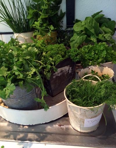 fresh Ballymaloe herbs