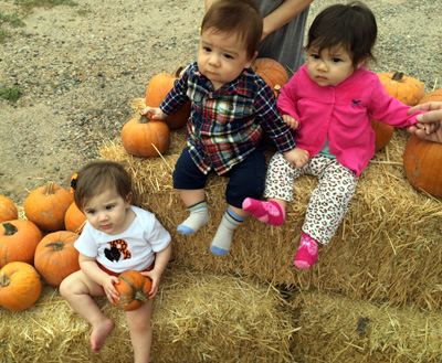BZZ Pumpkin patch