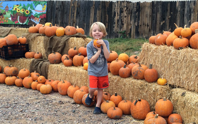 greyson pumpkin patch
