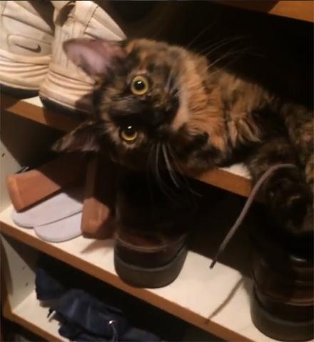 shoe cat copy
