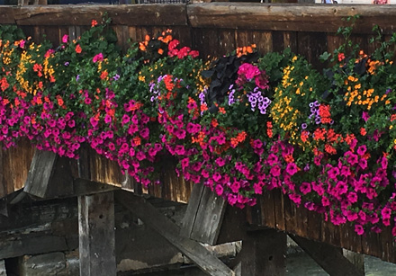 flowers on bridge